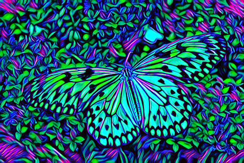 butterfly photo turned into psychedelic art