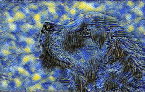 dog photo turned into starry night painting