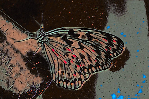 butterfly photo turned into graffiti art
